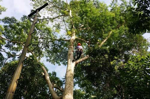 Arborist — All Tree Management in Mackay