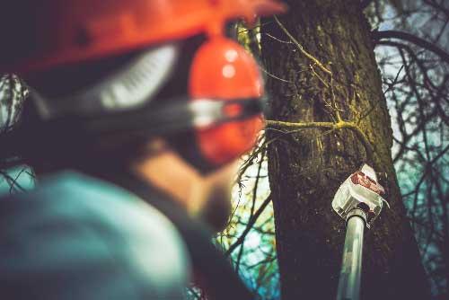 Arborist — Mackay tree removalist in QLD